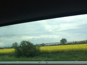 Tuscan mustard